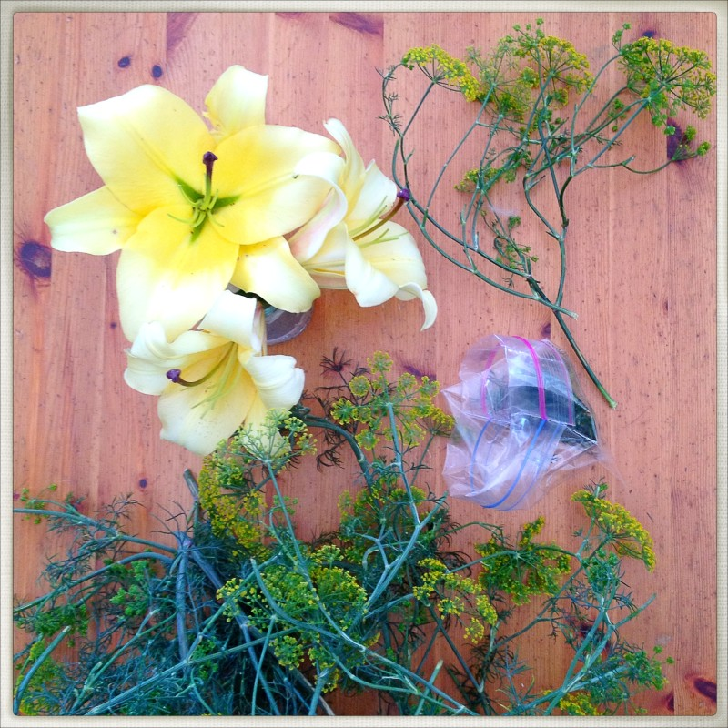 Dill and Lilies