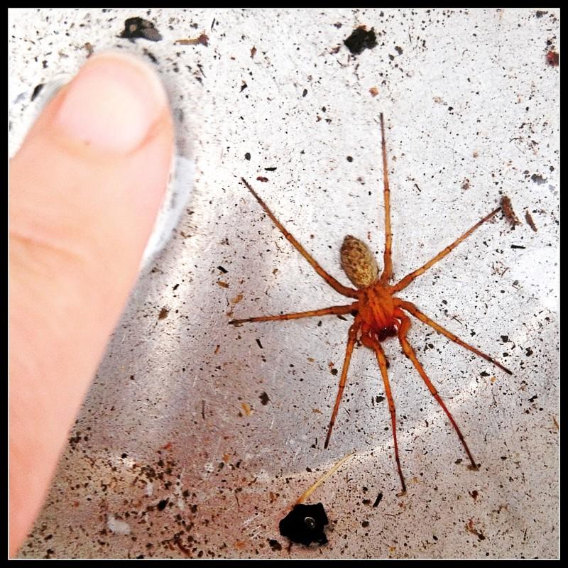 Gah! Spider!!!