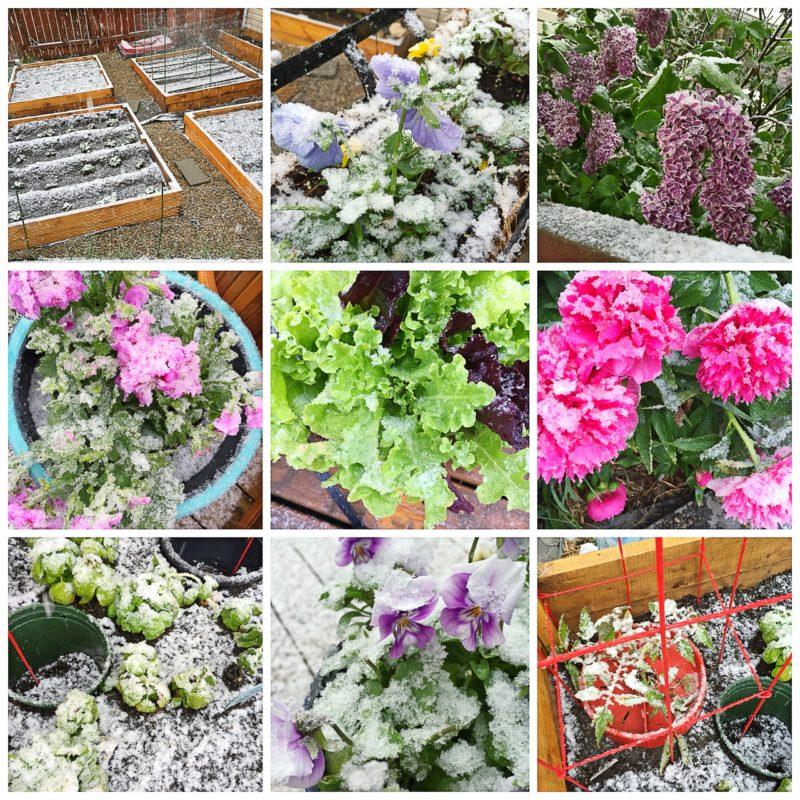 Snowy 2016 Garden